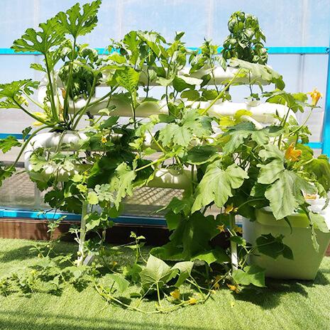 מערכת הידרו ורטיקלית מרום לגידול 24 צמחים במינימום מקום