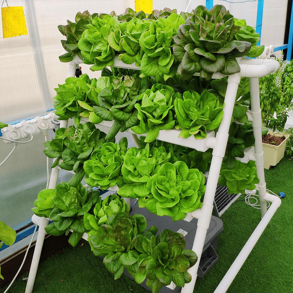 NFT תעלות מרובעות לגידול 40 צמחים