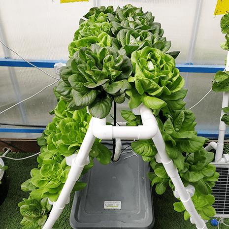 לגידול תבלינים וירוקים בעיקר ב1 מטר מרובע