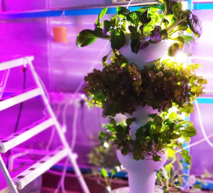 AIRPONIC EBB&FLOW | מערכת הידרופונית מעוצבת בשיטת הצפה וריקון לגידול 44/56 צמחים.
